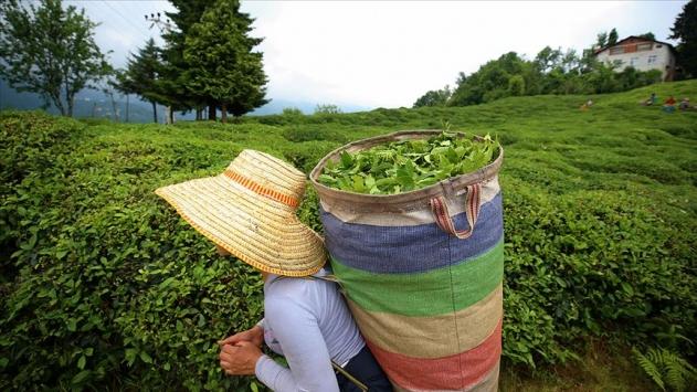 Türk çayından yılın ilk yarısında 7,5 milyon dolar gelir