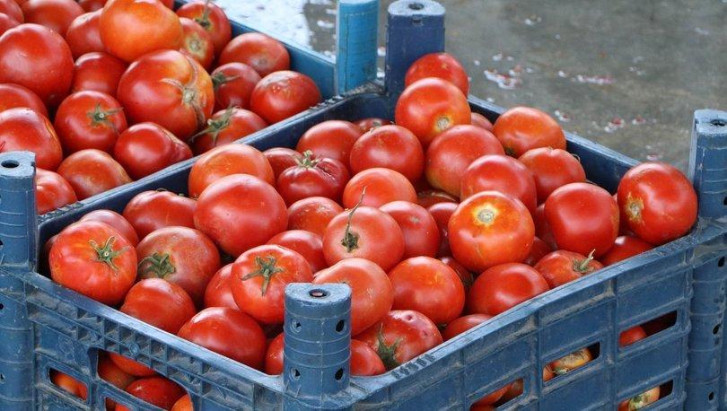 Batı Akdeniz'in meyve ve sebze ihracatında artış