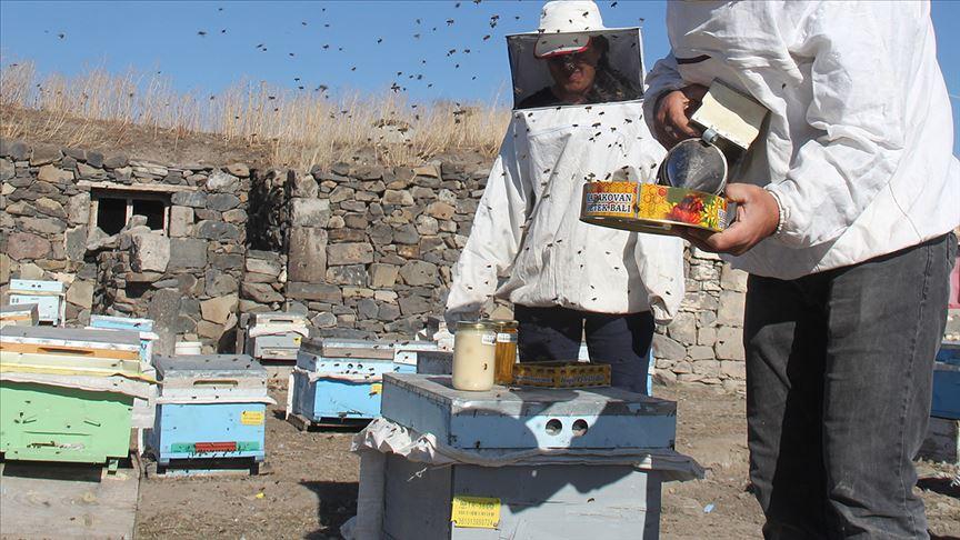 arı-yetiştiricileri
