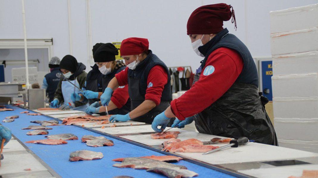 Karadeniz somonu, en çok Rusya'ya ihraç edildi