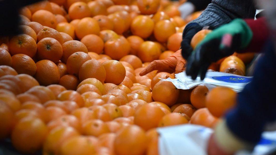 portakal ihracatı